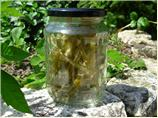 Homemade Candied Angelica - for Cakes, Bakes and Desserts