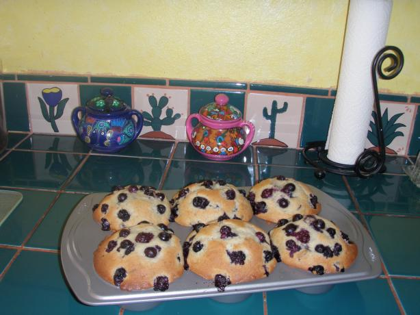 CopyCat Junior&#39;s &#34;Berries on Top&#34; Jumbo Blueberry Muffins. Photo by Hissy Hussy