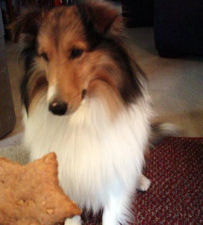 Peanut Butter Treats for Dogs. Photo by CA.TN