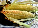 Grilled Fresh Sweet Corn on the Cob in Husks